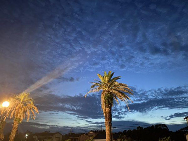 画像に alt 属性が指定されていません。ファイル名: 夜のヤシの木-600x450.jpeg